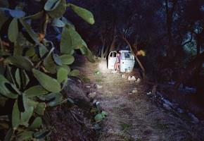 Kaktus  <br> 2007