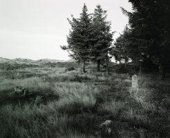 Wäldchen <br> 2010